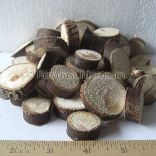 Corkscrew Willow Coins